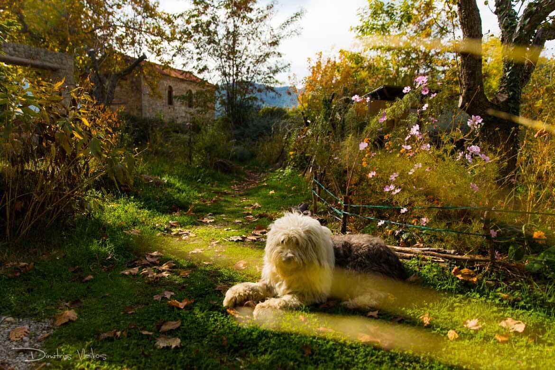 regreen_seliana_yoga_retreat_dimitris_Vlaikos-3